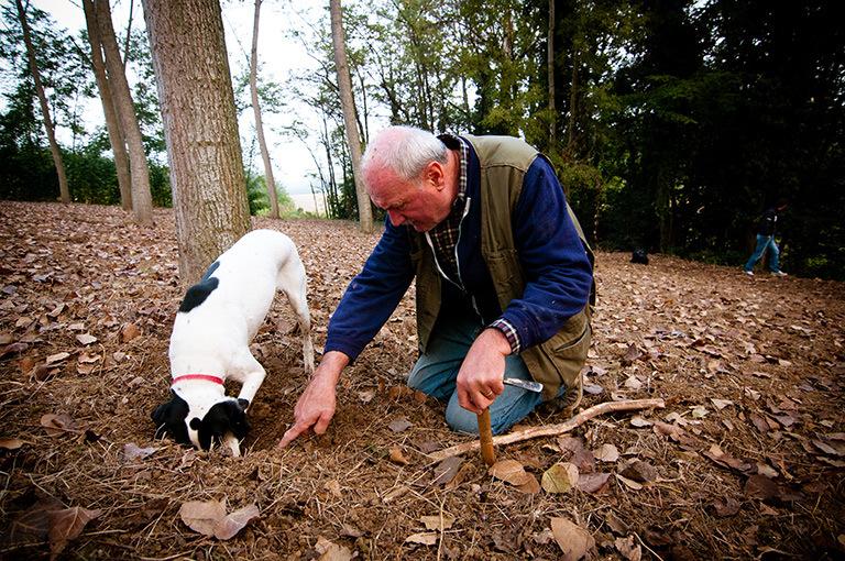 Monferrato Truffle Hunting